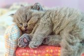 Little, Darling, A Gray Kitten Sleeps On A White, Fluffy Cover, Selective Focus poster