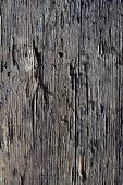 Decayed Timber Surface