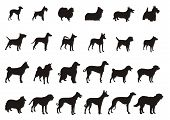 stock photo of sheltie  - Set of Vector Silhouettes different kinds dogs - JPG