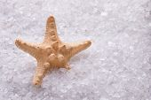 Crystals Of Sea Salt Close Up. Starfish And Sea Salt. Starfish Lying In Crystals Of White Sea Salt. poster