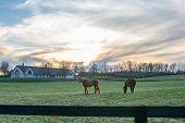 Horses Grazing In Kentucky poster