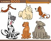 foto of newfoundland puppy  - Cartoon Comic Illustration of Canine Breeds or Purebred Dogs Set - JPG