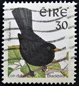 IRELAND - CIRCA 1998: A stamp printed in Ireland shows Common Blackbird Turdus merula circa 1998