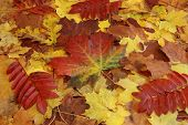 Colourful Autumn Foliage Background