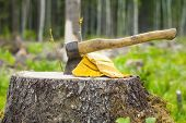 image of ax  - Ax carved in stump in forest in summer - JPG