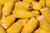foto of corn cob close-up  - Corn on the Cob  - JPG