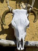 stock photo of baphomet  - A bulls skull used as decoration on a cottage house - JPG