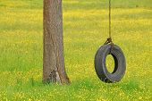 image of tire swing  - Tire swing hanging from a white oak tree in a field of yellow wildflowers and grass - JPG