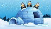 pic of igloo  - Illustration of the three penguins above the igloo - JPG