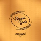 pic of spike  - grain organic vintage design background - JPG