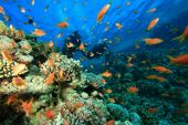 picture of coral reefs  - Scuba Divers explore a beautiful coral reef - JPG