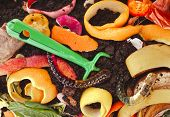 stock photo of household farm  - kitchen scraps in compost soil pile surface top view close up  - JPG