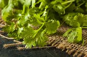 stock photo of cilantro  - Organic Raw Green Cilantro on a Background - JPG