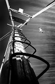 pic of mast  - A Photograph of a boat mast with a seagull flying by  - JPG