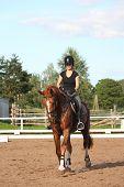 stock photo of chestnut horse  - Brunette woman riding trotting chestnut horse on a sunny day - JPG