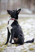 stock photo of mongrel dog  - Doggie on walk - JPG