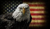picture of bald head  - Oil painting of a majestic Bald Eagle against a photo of a battle distressed American Flag - JPG