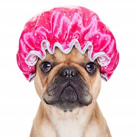 image of bathing  - french bulldog dog ready to have a bath or a shower wearing a bathing cap isolated on white background - JPG