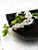 stock photo of black-cherry  - white branch cherry blossom in black bowl on a wooden background - JPG