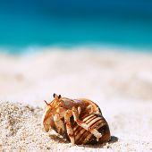 stock photo of hermit  - Hermit crab on beach at Seychelles - JPG