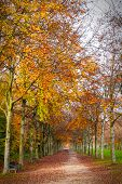 picture of versaille  - Autumn trees and road in Versailles garden outdoors - JPG