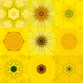 picture of kaleidoscope  - Collection of Nine Yellow Concentric Flower Mandalas - JPG