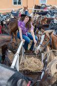 foto of feeding horse  - cowboy lady feeding horses in stable closeup - JPG
