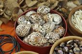 Many Tiger Cowrie Shell