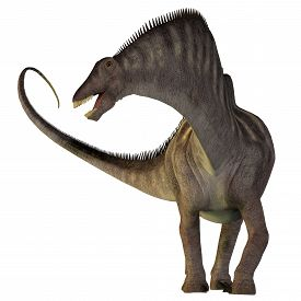 pic of herbivore  - Amargasaurus was a herbivorous sauropod dinosaur that lived in Argentina during the Cretaceous Era - JPG