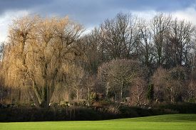 picture of weeping  - Beautiful sunlight on a weeping willow and some other trees at the end of the day in winter - JPG