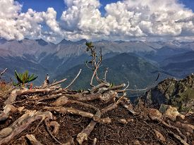 picture of rosa  - the tree and the view from it