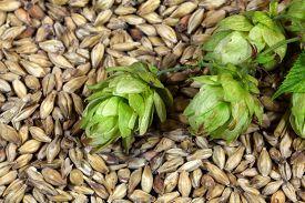 stock photo of malt  - Macro photo of hops and malt as background - JPG