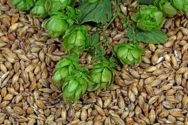 picture of malt  - Macro photo of hops and malt as background - JPG