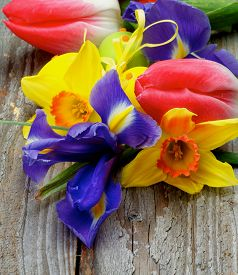 pic of purple iris  - Arrangement of Yellow Daffodils Magenta Tulips Purple Irises with Yellow and Green Spotted Easter Eggs closeup on Rustic Wooden background - JPG