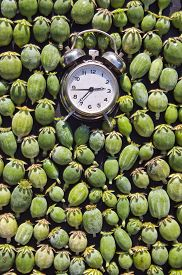 picture of opiate  - An alarm clock with opium poppy seedheads concept - JPG