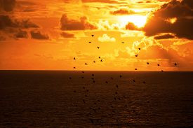 picture of flock seagulls  - flocks of starlings flying into a bright orange sunset sky in the wild atlantic way - JPG