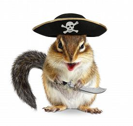 stock photo of chipmunks  - Funny animal pirate chipmunk with hat and sabre - JPG
