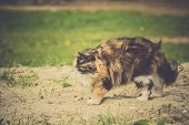 Tabby Fluffy Cat poster