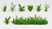 Realistic Green Grass. 3d Fresh Spring Plants, Different Herbs And Bushes For Posters And Advertisem poster