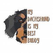 Illustration Dachshund Dog - My Dachshund Is My Best Friend. Puppy Dog eyes, Wagging Tail, Smiling poster