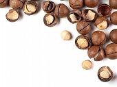 Set Of Macadamia Nuts On White Background. Set Of Macadamia Nuts - Whole Unshelled, With Open Shells poster