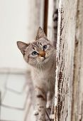 Little Cat On Window. Tabby Cat On Wooden Window / The Cute Cat On The Window Looking At Camera. poster