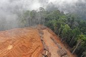 Deforestation. Aerial photo of logging in Malaysia rainforest  poster