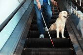 Blind Person With Long Cane And Guide Dog On Escalator Indoors poster