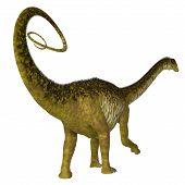 Nigersaurus Dinosaur Tail 3d Illustration - Nigersaurus Was A Herbivorous Sauropod Dinosaur That Liv poster