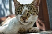 Handsome Stray Cat Girl, Close Up Animal Photography poster