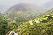 stock photo of luzon  - Rice terrace in the rain - JPG