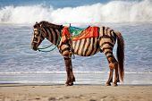 Zebra horse,  fake zebra on the beach against the sea background