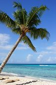 foto of west indies  - Caribbean Beach with palm trees - JPG