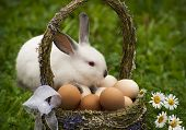 stock photo of baby easter  - Easter basket with eggs and the Easter bunny - JPG